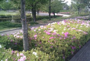 パークアリーナ小牧のローラースケート場・花13