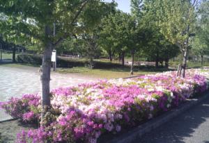 パークアリーナ小牧・花2020050801