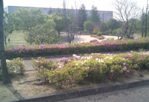 パークアリーナ小牧のローラースケート場・花18